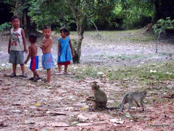 Kambodża - Siem Reap - maj 2012 - małpy