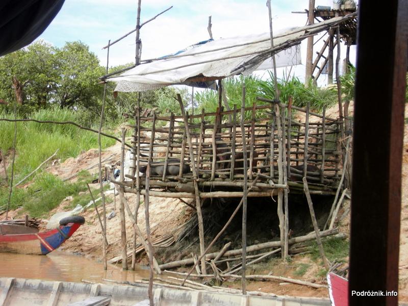 Kambodża - Siem Reap - maj 2012 - Floating Village - trzoda chlewna