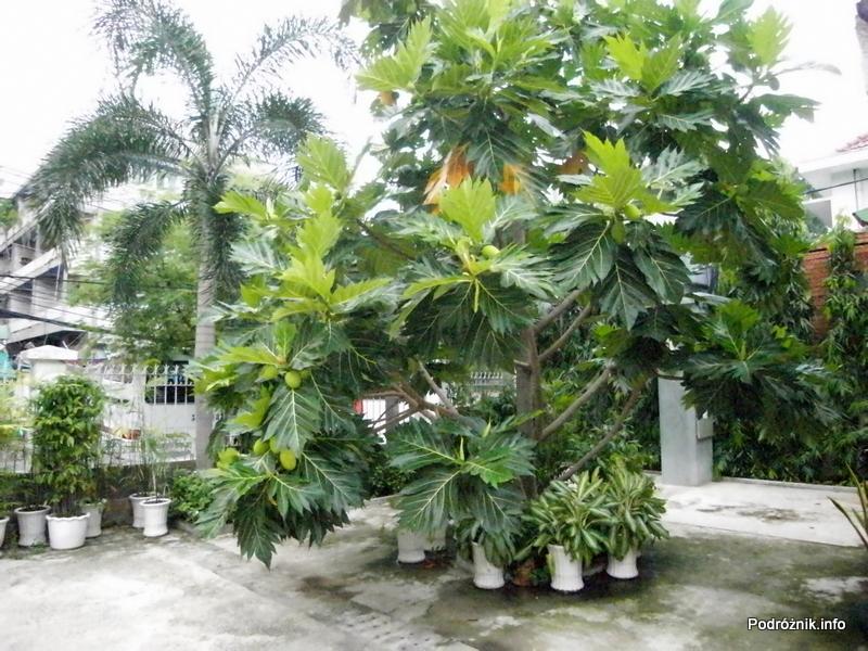 Wietnam - Ho Chi Minh (Sajgon) - maj 2012 - durian na drzewie