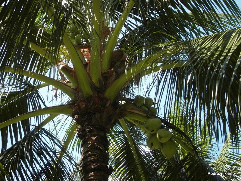 Wietnam - Nha Trang - maj 2012 - Diamond Bay Resort & Spa - palma kokosowa