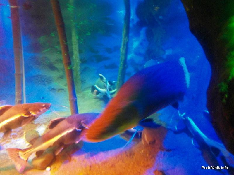 Wietnam - Nha Trang (Vinpearl Land) - maj 2012 - egzotyczne akwarium