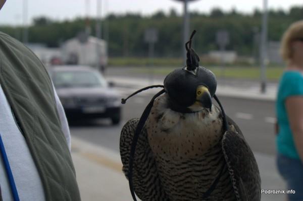 Lotnisko Modlin - sokół