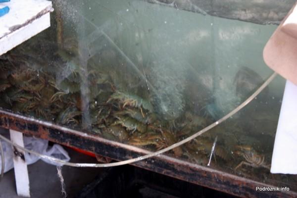 Armenia - Erewan - lipiec 2012 - akwarium z rakami