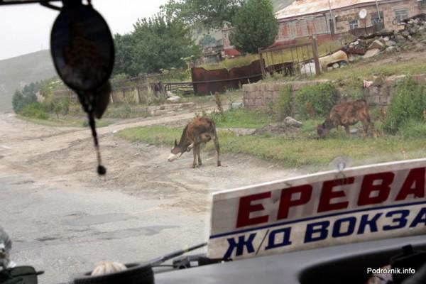 Armenia - sierpień 2012 - osioł przy drodze