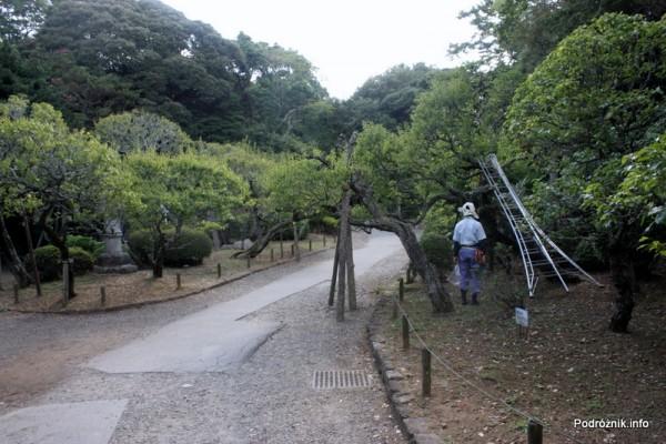 Japonia - Narita - ogrodnik w japońskim ogrodzie niedaleko Naritasan-Shinshoji Temple - sierpień 2012