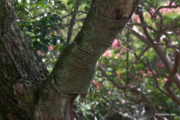 Japonia - Narita - zabezpieczona sznurkiem gałąź drzewa w japońskim ogrodzie niedaleko Naritasan-Shinshoji Temple - sierpień 2012