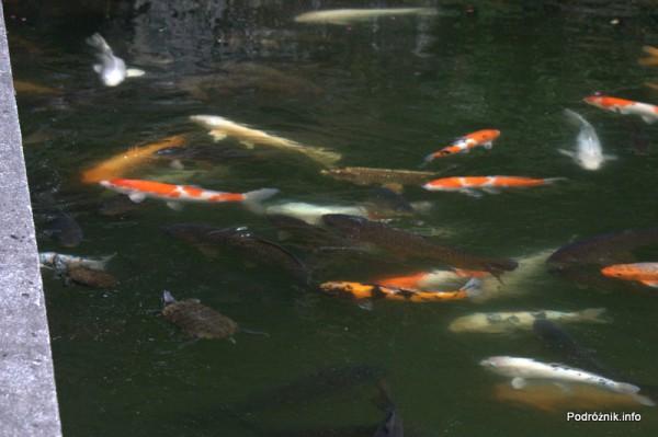 Japonia - Narita - kolorowe ryby i żółwie w japońskim ogrodzie niedaleko Naritasan-Shinshoji Temple - sierpień 2012