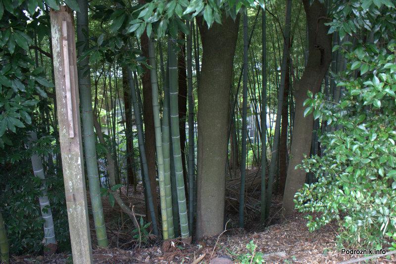 Japonia - Narita - drzewa w parku - okolice Naritasan-Shinshoji Temple - sierpień 2012