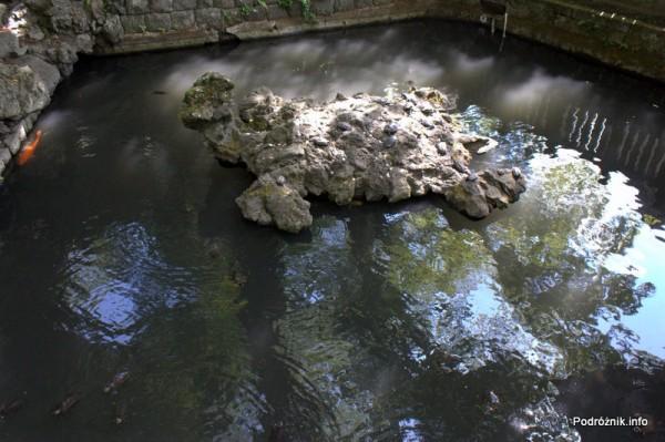 Japonia - Narita - żółwie na żółwiowej wyspie - okolice Naritasan-Shinshoji Temple - sierpień 2012