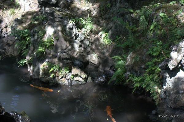 Japonia - Narita - żółwie - okolice Naritasan-Shinshoji Temple - sierpień 2012