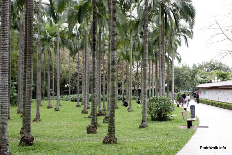 Chiny - Shenzhen - park przy stacji metra Tongxinling - palmy - kwiecień 2013