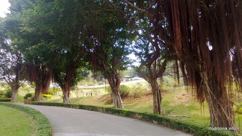 Chiny - Shenzhen - Splendid China Folk Village - alejka z drzewami - kwiecień 2013