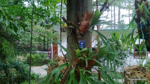 Chiny - Shenzhen - ogród botaniczny - część z motylami i orchideami - kwiecień 2013