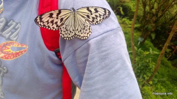 Chiny - Shenzhen - ogród botaniczny - część z motylami i orchideami - motyl siedzący na mojej koszulce - kwiecień 2013