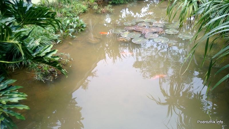 Chiny - Shenzhen - ogród botaniczny - rośliny wodne - kwiecień 2013