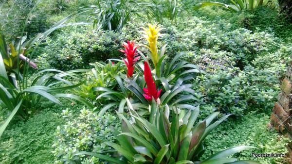 Chiny - Shenzhen - ogród botaniczny - Shade Loving Plants Garden - kwiecień 2013