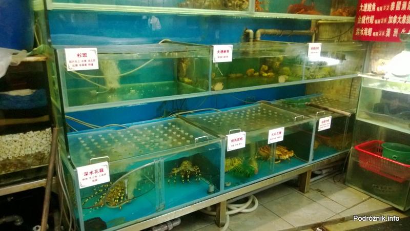 Chiny - Makao - wieczorny spacer po mieście - akwarium z owocami morza w witrynie restauracji - kwiecień 2013