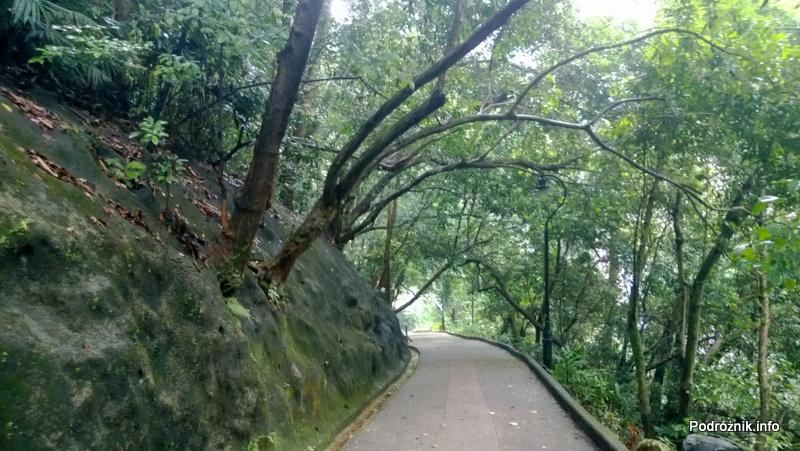 Chiny - Hongkong - Wzgórze Wiktorii (The Peak) - stroma ścieżka otoczona zielenią - kwiecień 2013