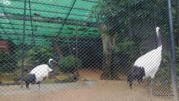 Chiny - Hongkong - ogród zoologiczny - wybieg z dużymi ptakami - kwiecień 2013