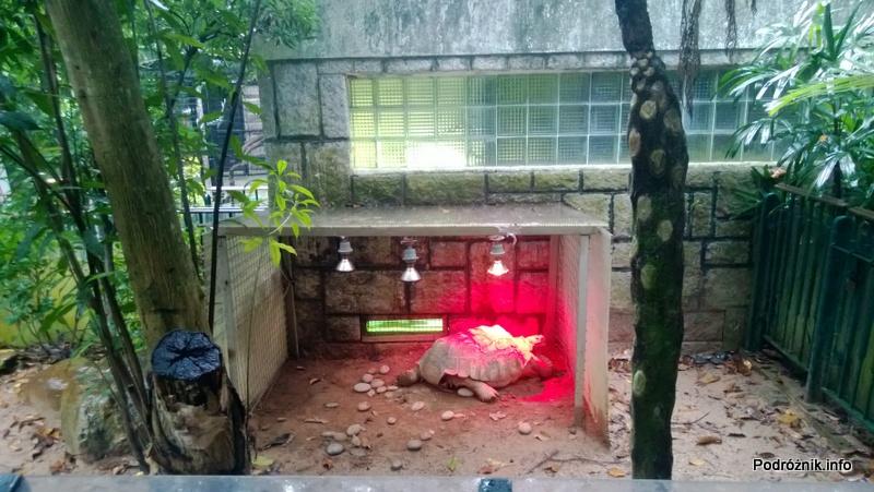 Chiny - Hongkong - ogród zoologiczny - duży żółw pod lampami dogrzewającymi - kwiecień 2013