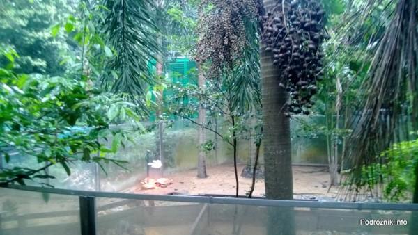 Chiny - Hongkong - ogród zoologiczny - żółwie pod lampą dogrzewającą - kwiecień 2013