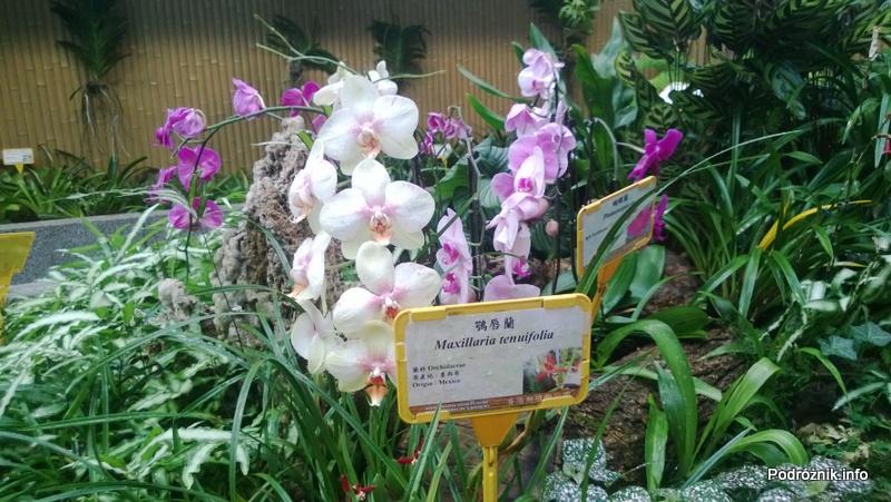 Chiny - Hongkong - ogród botaniczny - piękne storczyki - kwiecień 2013