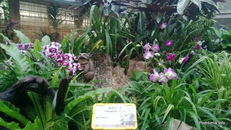 Chiny - Hongkong - ogród botaniczny - storczyki - kwiecień 2013