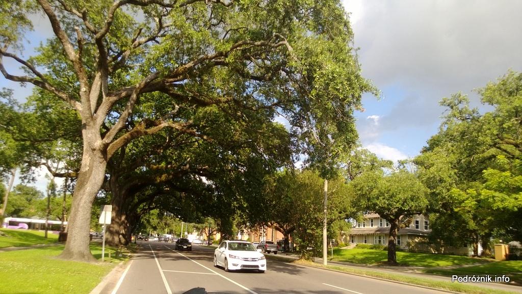 USA - Nowy Orlean - dęby przy ulicy - czerwiec 2013