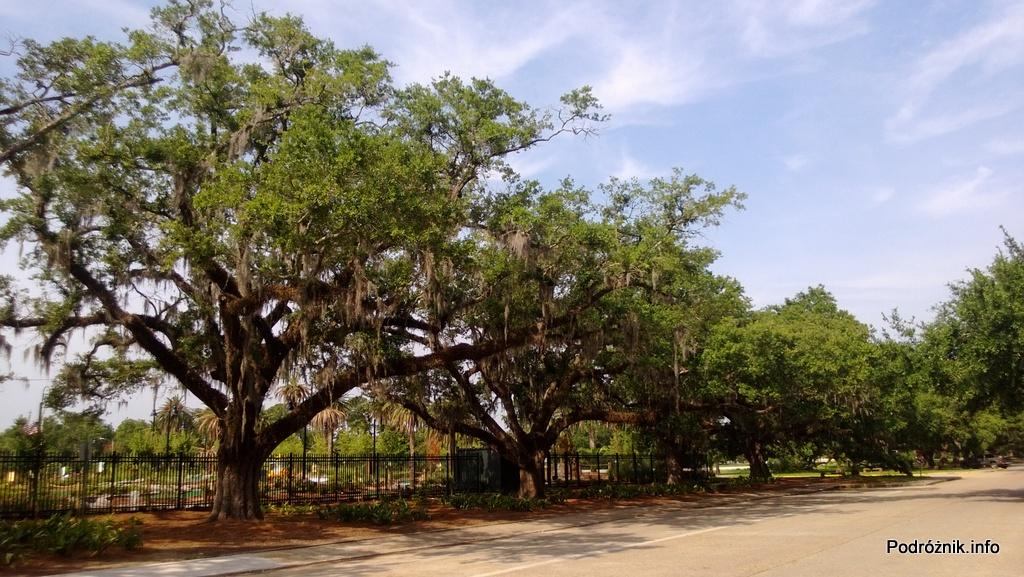 USA - Nowy Orlean - Park miejski - dęby obwieszone mchem hiszpańskim - czerwiec 2013