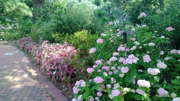 USA - Nowy Orlean - Ogród Botaniczny - kwiaty przy alejce - czerwiec 2013