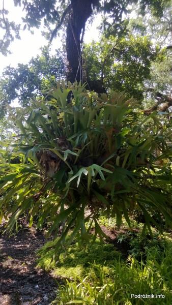 USA - Nowy Orlean - Ogród Botaniczny - wiszące kwiaty - czerwiec 2013