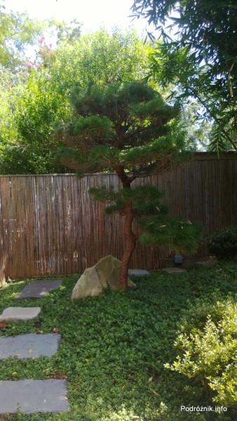 USA - Nowy Orlean - Ogród Botaniczny - japoński ogród - bonzai - czerwiec 2013