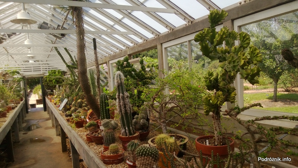 USA - Nowy Orlean - Ogród Botaniczny - najwyższa roślina to Euphorbia - czerwiec 2013