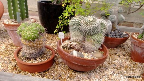 USA - Nowy Orlean - Ogród Botaniczny - kaktusy - czerwiec 2013
