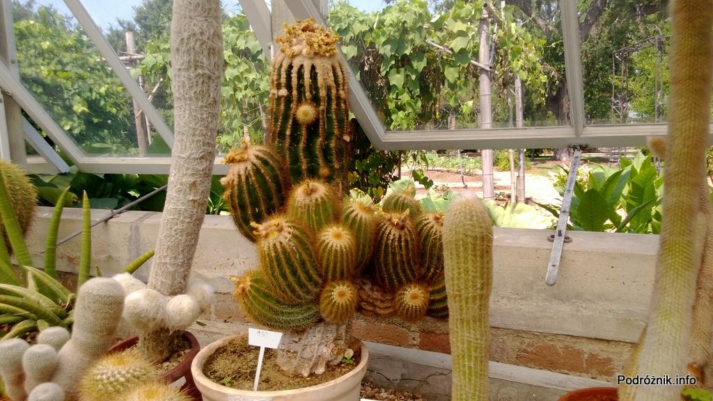 USA - Nowy Orlean - Ogród Botaniczny - Parodia - czerwiec 2013