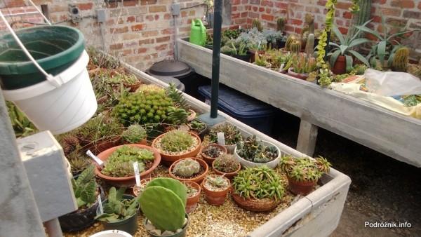 USA - Nowy Orlean - Ogród Botaniczny - kaktusowe zaplecze - czerwiec 2013