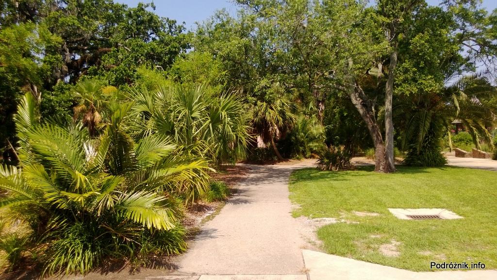 USA - Nowy Orlean - Ogród Botaniczny - małe palmy przy drodze - czerwiec 2013