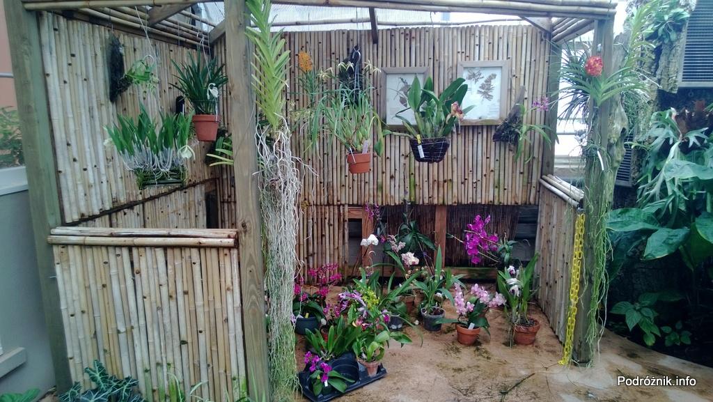 USA - Nowy Orlean - Ogród Botaniczny - tropikalny las deszczowy - storczyki - czerwiec 2013