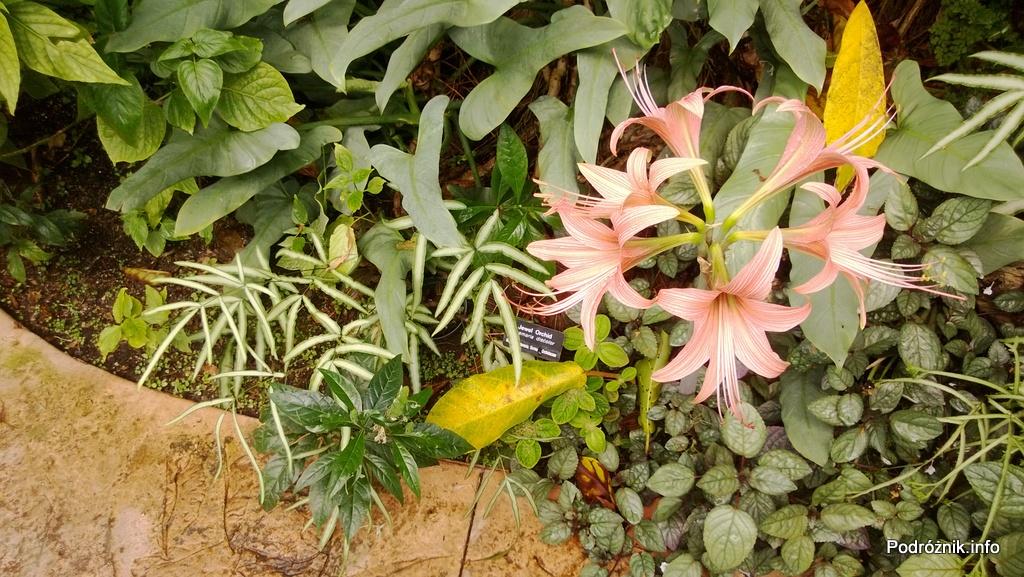 USA - Nowy Orlean - Ogród Botaniczny - tropikalny las deszczowy - kwiaty - czerwiec 2013