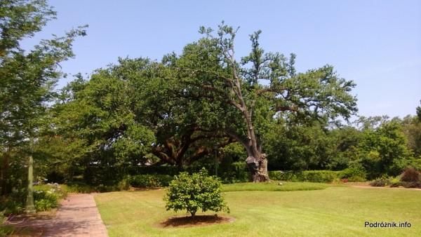 USA - Nowy Orlean - Ogród Botaniczny - czerwiec 2013