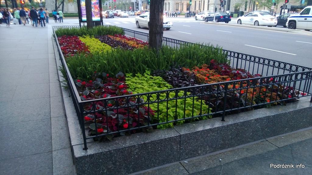 USA - Chicago - piękna rabata z kwiatami - czerwiec 2013