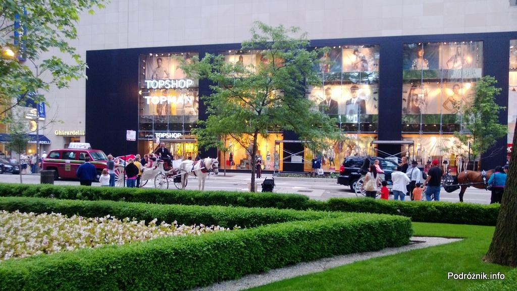 USA - Chicago - zieleń w centrum - czerwiec 2013