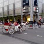 USA - Chicago - białe dorożki - czerwiec 2013