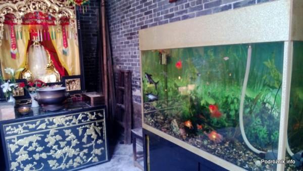 Chiny - Makao - akwarium w Hong Kung Miu Temple - kwiecień 2013