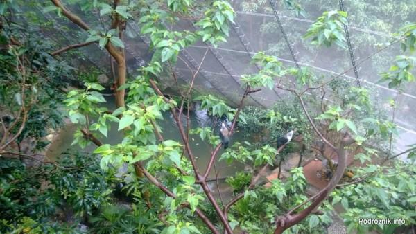 Chiny - Hongkong  - Hong Kong Park - ptaszarnia - woliera - (aviarium) - wewnątrz  - kwiecień 2013