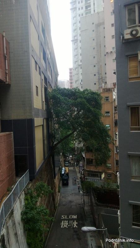 Chiny - Hongkong - drzewo wyrastające z muru - kwiecień 2013