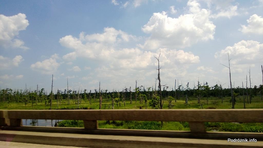 USA - autostrada I10 na palach miedzy Baton Rouge a Nowym Orleanem - kikuty drzew na bagnach - czerwiec 2013