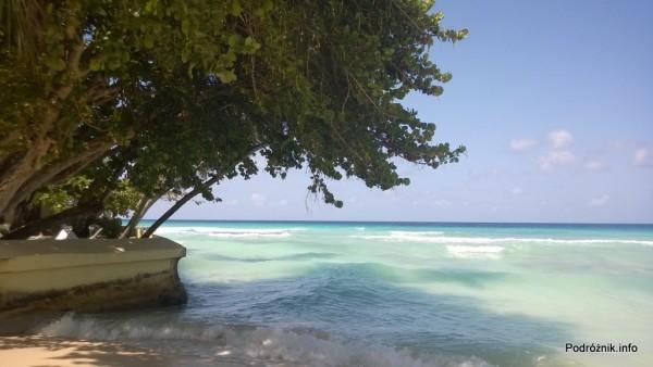 Barbados - Dover Beach - drzewa nad samą wodą - maj 2014